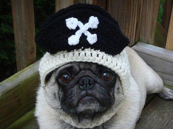 Печальные мопсики в шапках