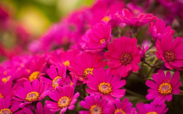 Красочные цветочки