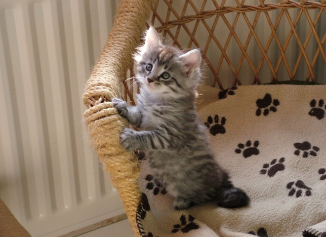 Если ты решила завести котенка