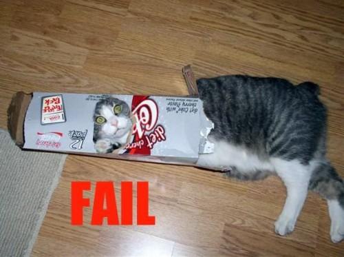 Кошачий FAIL