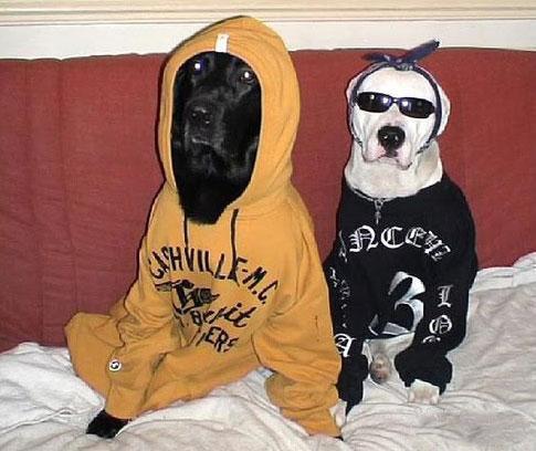 Собаки - реальные пацаняки