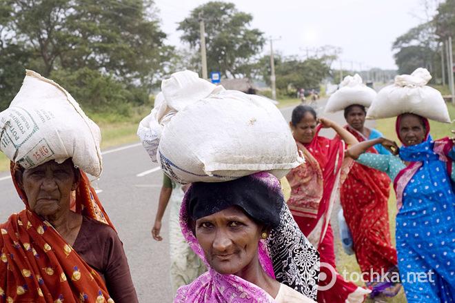 Топ-10 интересных фактов о Шри-Ланке