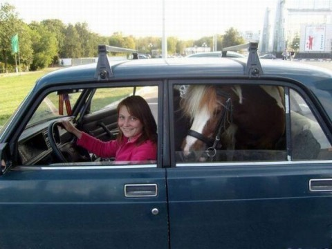 Такси на конюшню!!