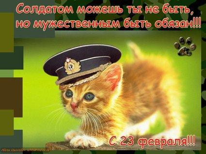 Котейные открытки с 23 февраля