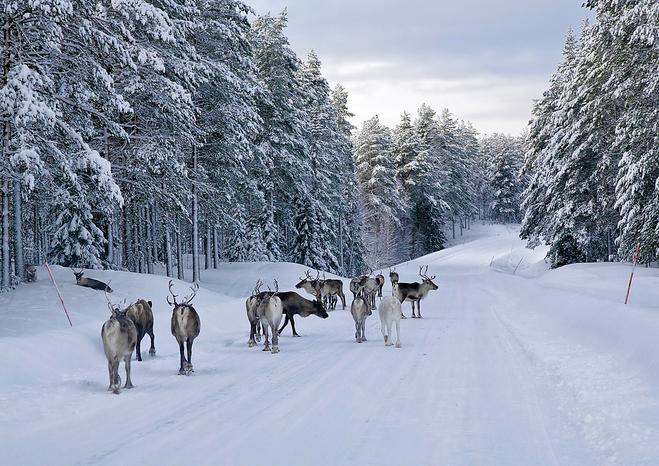 Сніжне сафарі в Швеції