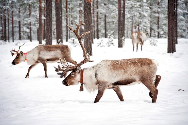 Тури на Різдво 2015: незабутнє свято в Європі