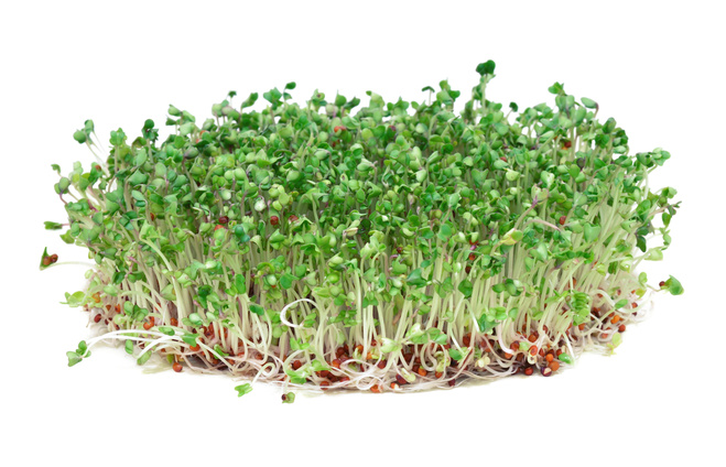 Мікрозелень
