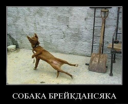 Демотиваторы с собачками