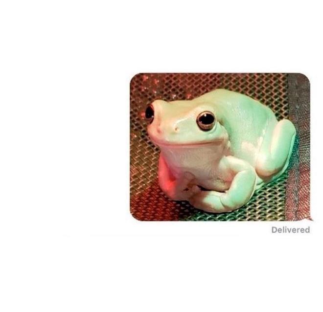 Воспитанная лягушка