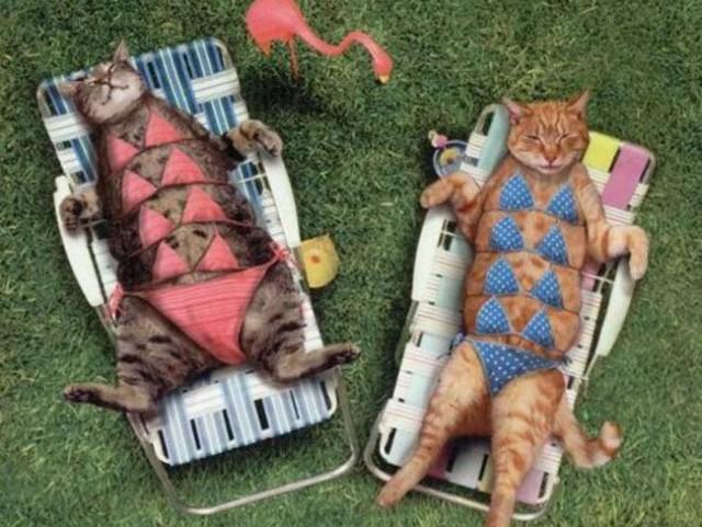 Животные в купальниках