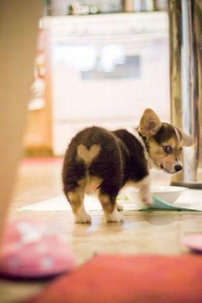 Животные, отмеченные любовью