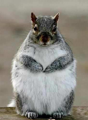 ей, толстый!!