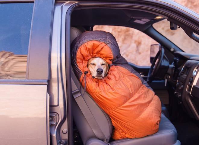 Невероятные приключения собаки-путешественницы Мэдди по Америке