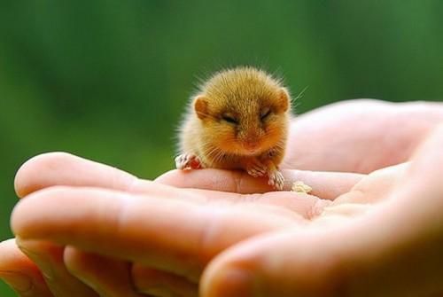 Животные малыши