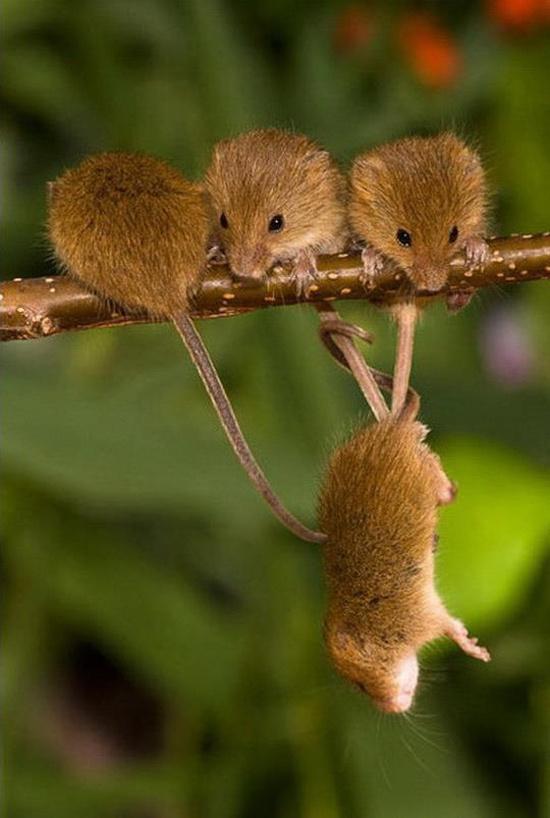 Позитивные мышки
