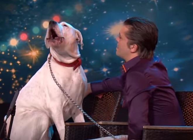 Собака співає пісню Вітні Х'юстон
