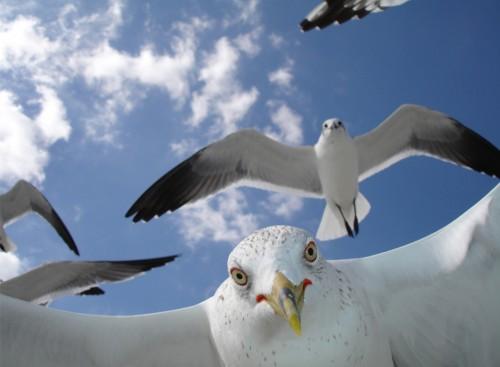 Несколько работ учавствующих в конкурсе фото конкурсе National Geographic 2009 года