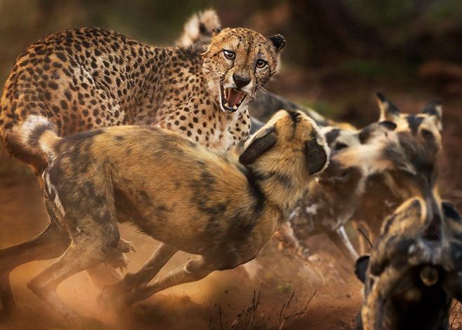 фото животных в дикой природе