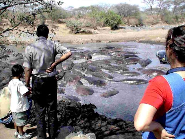 Опасные места. South Luangwa National Park, Замбия