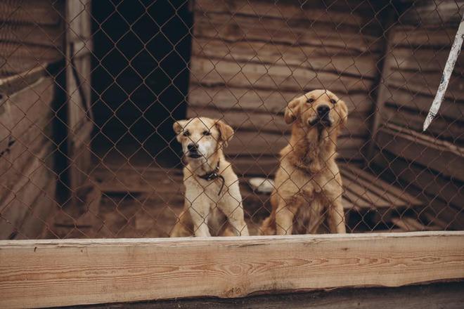Притулок для бездомних тварин Сіріус