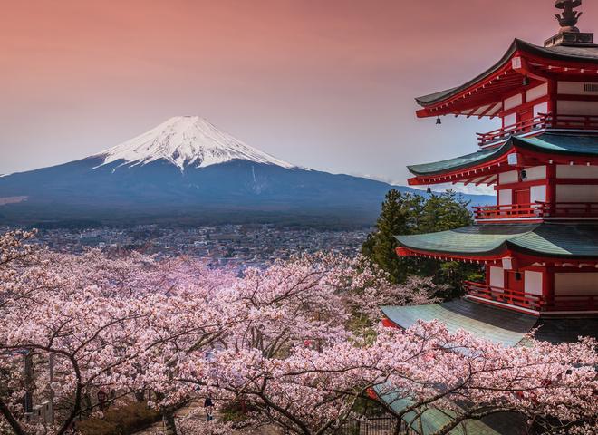 Япония. Сакура