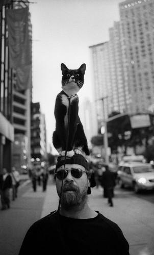 Выгул котов разрешен!;]
