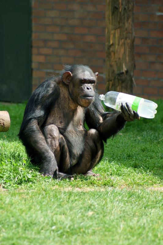 мальчик рожденный в год обезьяны под знаком рыбы