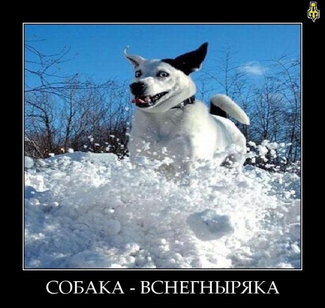 Собака улыбака демотиваторы