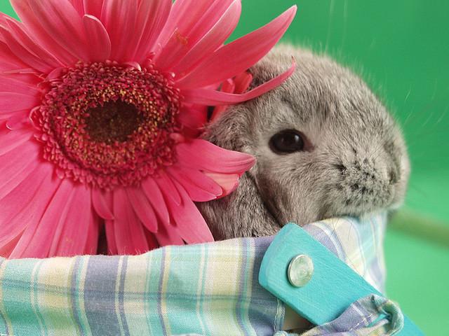 Красивая открытка на Пасху с кроликом
