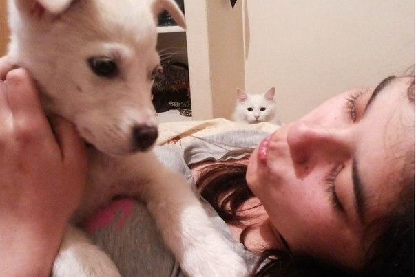 Самый ревнивый кот