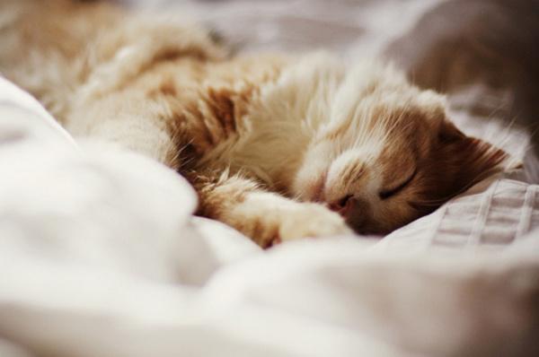 Мелкие нежатся в постельке