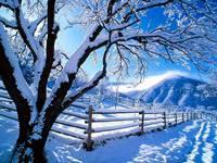 Яркие обои к зиме