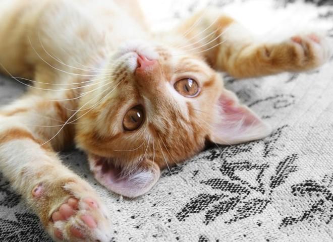 Домашние животные заслуживают отдых в люксе
