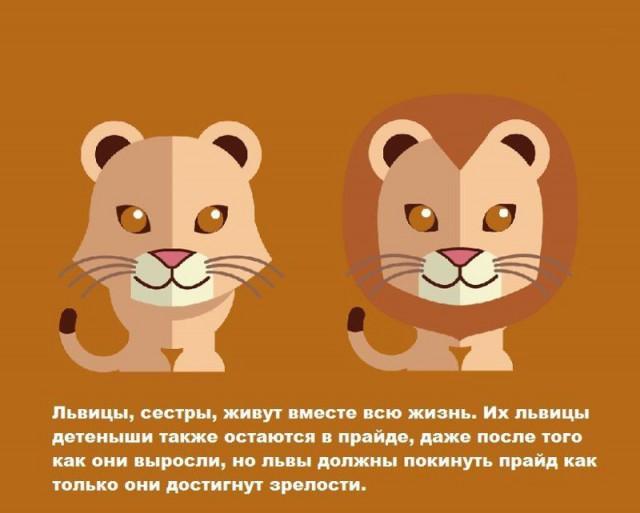 Занимательные факты о животных