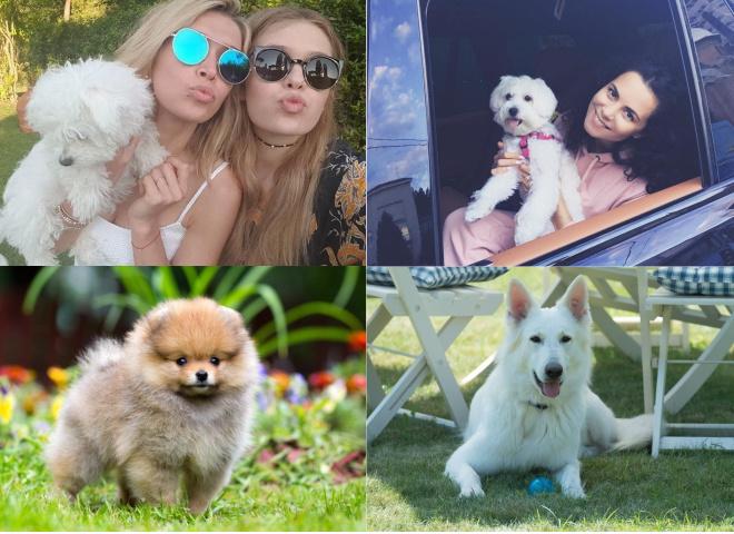 Собаки знаменитостей