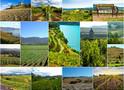 Топ-15 живописных виноградников мира