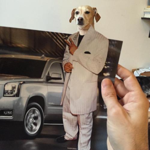 Забавные коллажи с собачками от Джей Риггио