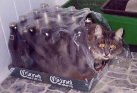 Лучшая кото подборка