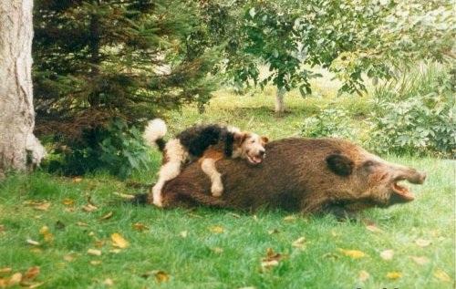 Озабоченные животные