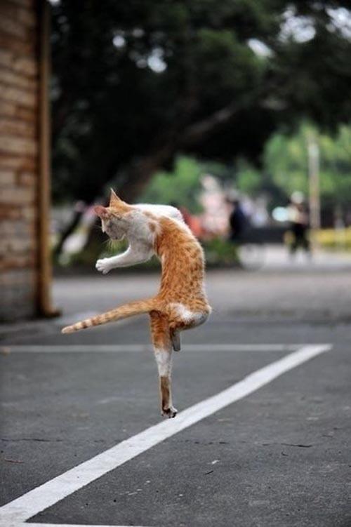 Пушистики танцуют балет