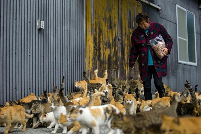 Аошіма: острів котів