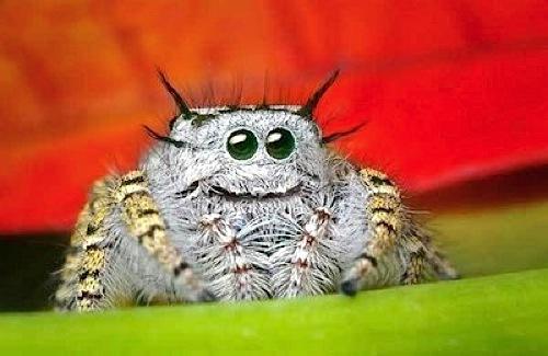 Кто говорил, что пауки страшные?