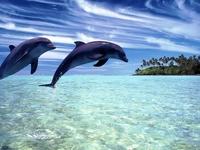 Картинки с дельфинами