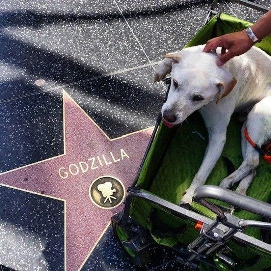 Пример настоящей дружбы между человеком и собакой