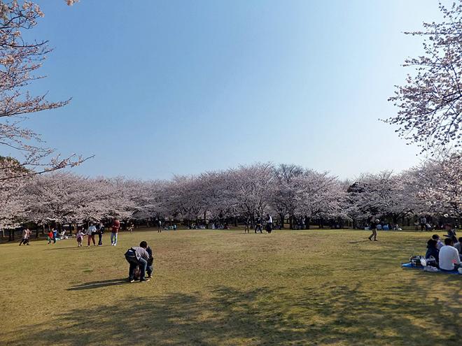 Фестивалі березня