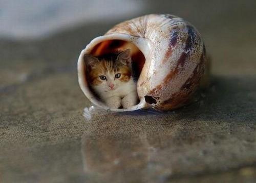 Уматовые котэ