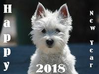 Счастливого Нового года собаки 2018