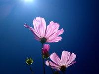 Цветы на солнце HD