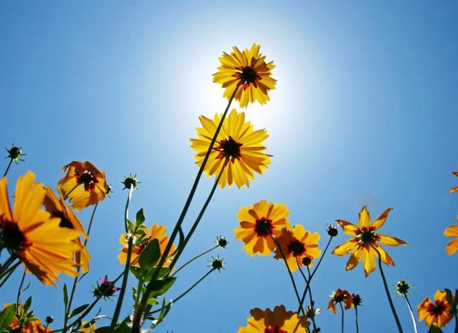 Хочешь привлечь любовь? Поставь цветы в вазу!