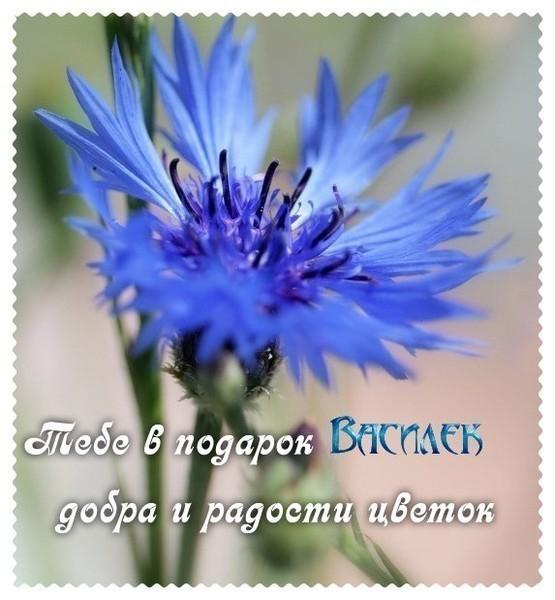Василёк - добра и радости цветок